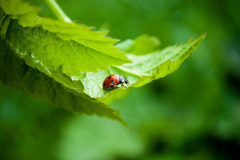 Alone Ladybug by rusfruit