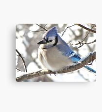 Icy Blue Morning (Blue Jay) Canvas Print