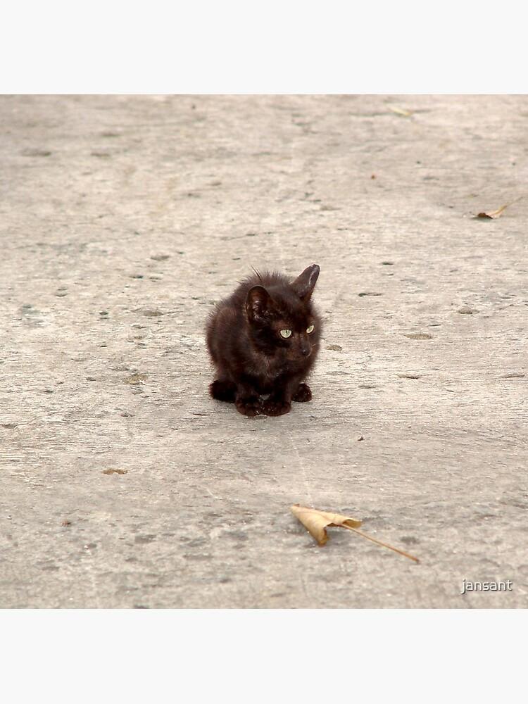 Stray Cat by jansant