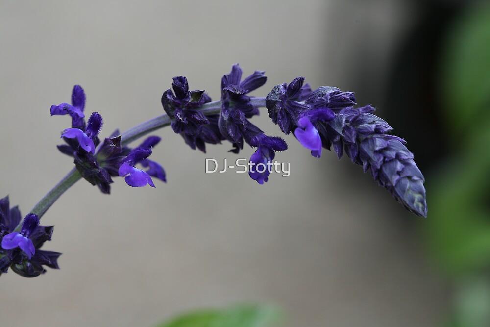 A sprig of Lavender by DJ-Stotty