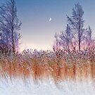 Cold moon by natans