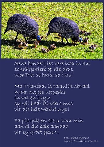 Bondeltjies vere ... by Pieta Pieterse