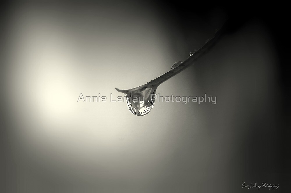 Drop in the Dark by Annie Lemay  Photography