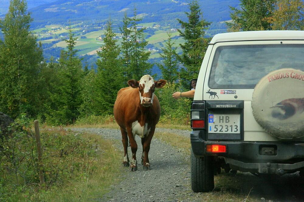 Cow Walk by AmyKippernes