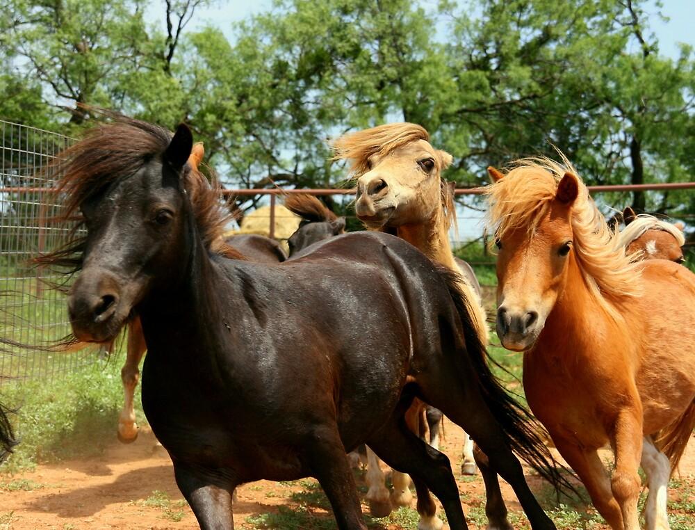 Horse Run by AmyKippernes