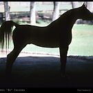 Arabian Horse Silhouette  by Bo Insogna