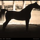 Arabian Horse Silhouette Sepia Black and White Print by Bo Insogna