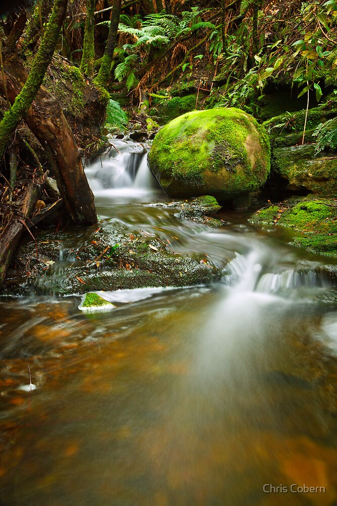 Myrtle Gully Rivulet, Tasmania #4 by Chris Cobern