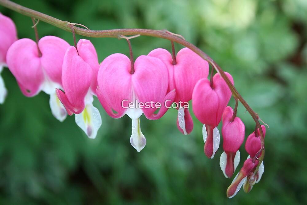 Pink bleeding heart flowers in spring by Celeste Cota