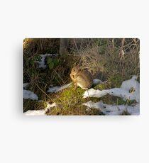 rabbit in the snow 2 Metal Print