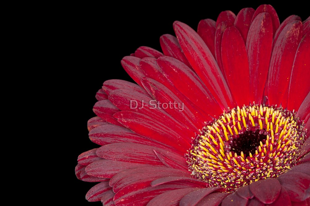Up close and passionate by DJ-Stotty