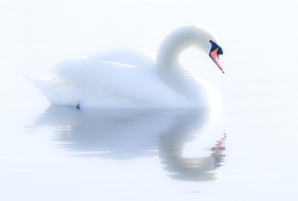 Swan Reflection by David Fletcher