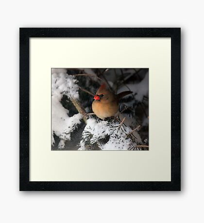 Winter Hideaway Framed Print