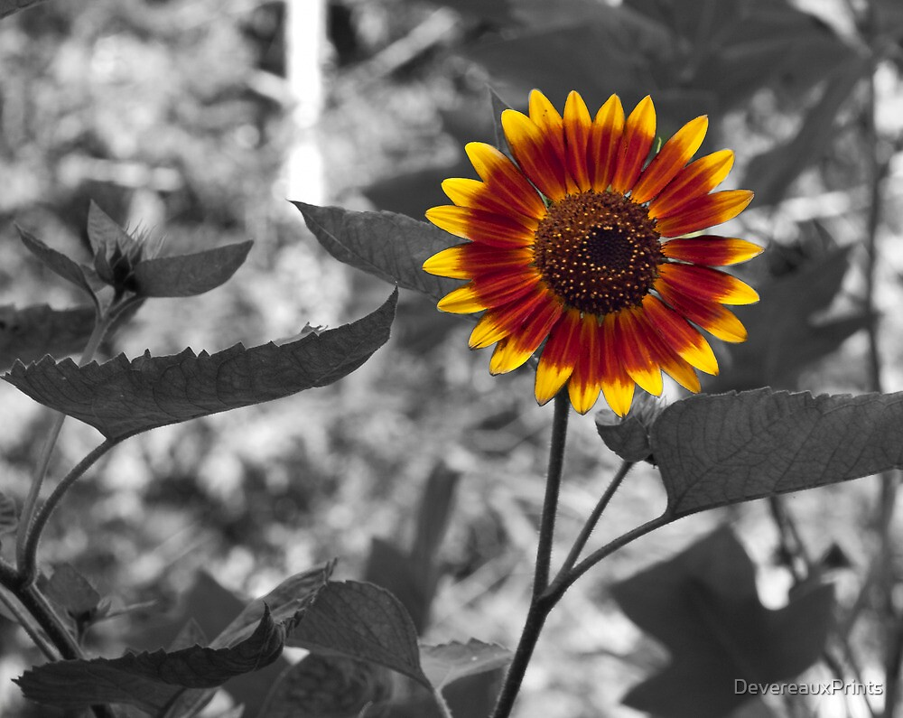 Sunflower by DevereauxPrints