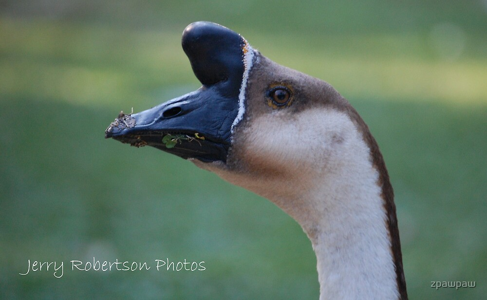African Goose by zpawpaw