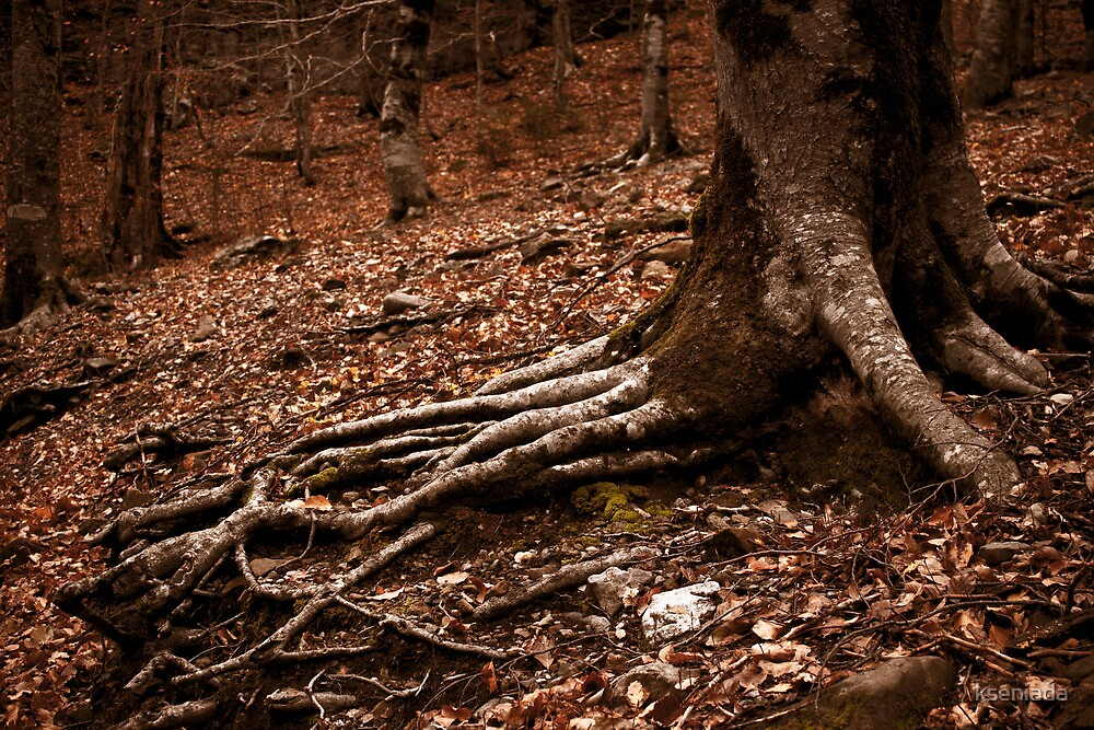 ...and the tree leaned with its palm to the earth by kseniada