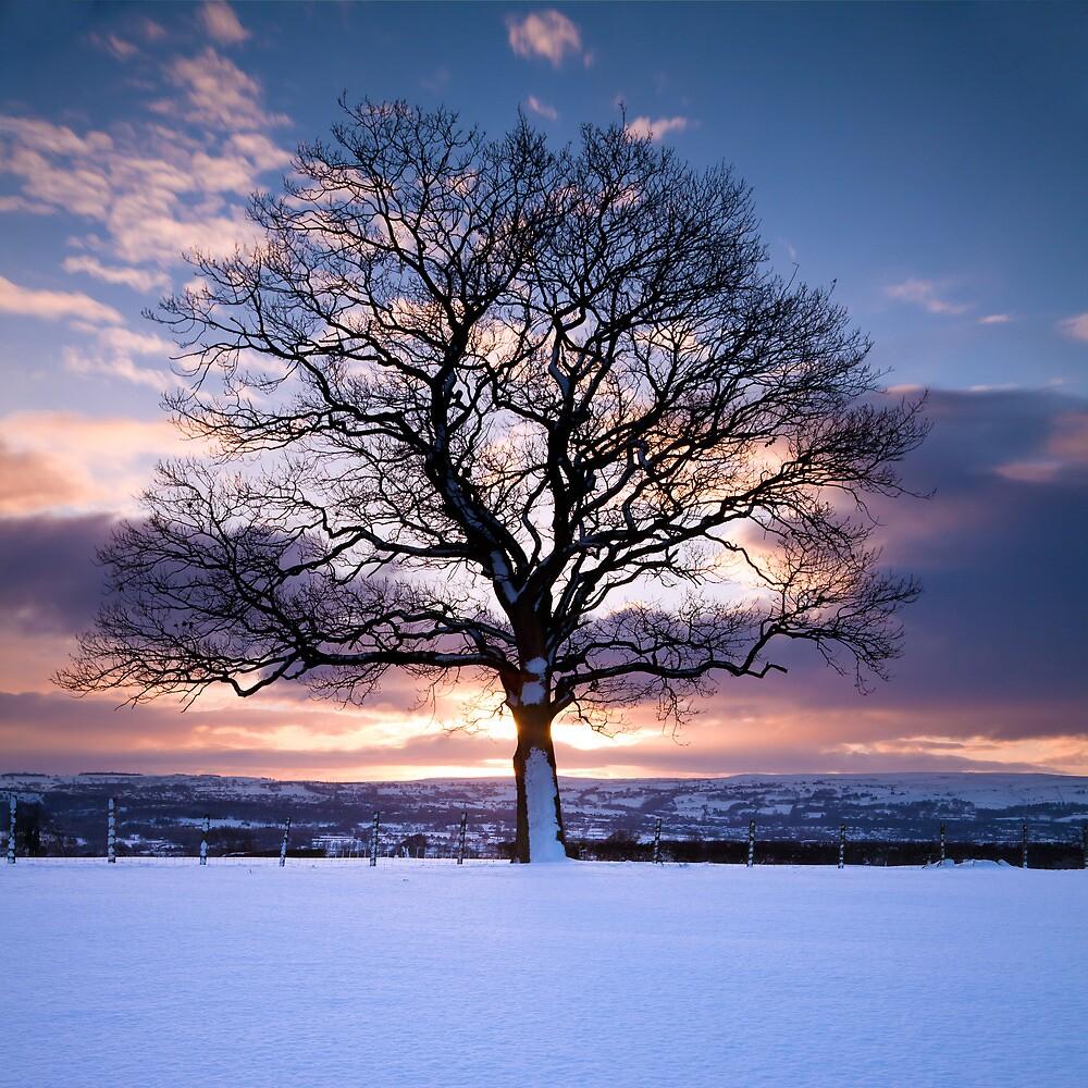 Winter Tree by SteveOnTheRun