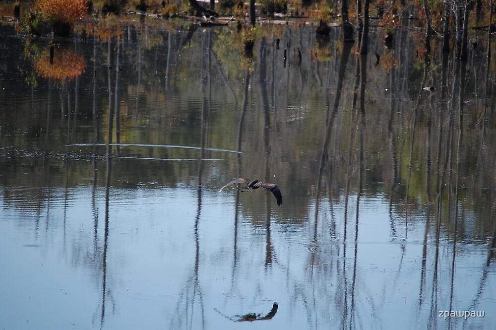 Heron in Flight by zpawpaw