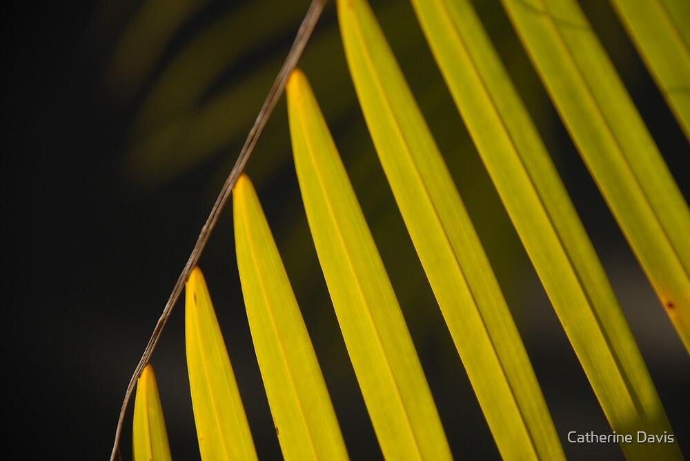 Palm Fan by Catherine Davis