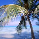 """Caribbean Breeze"" - palm tree in Nassau, Bahamas by ArtThatSmiles"