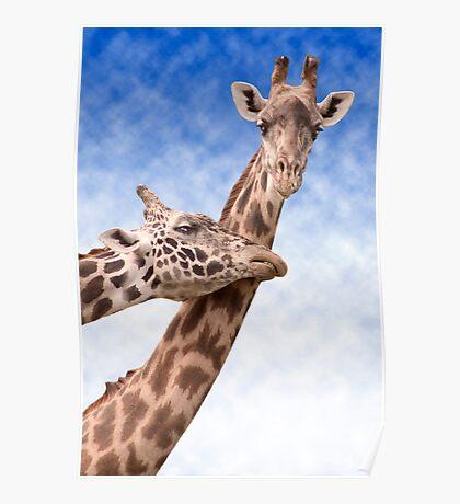 """Necking"" - giraffes showing affection Poster"