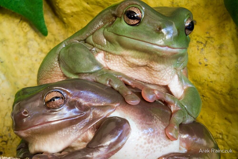 2 frogs by Arek Rainczuk