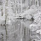 White Oak Swamp Dec. 13, 2010 by Betty Maxey