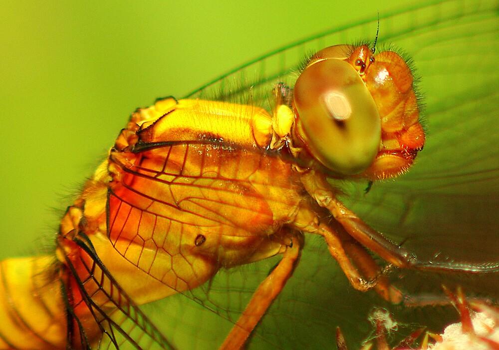 dragonfly2 by Grunto