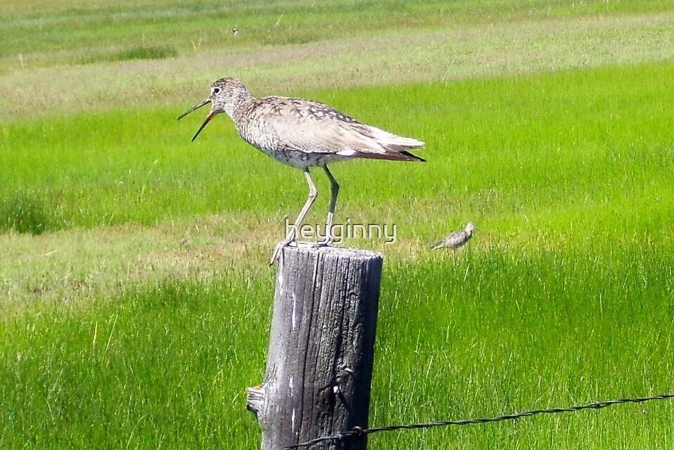 Bird calling warning by heyginny