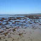 Waratah Beach, Seaweed.. by marijkasworld