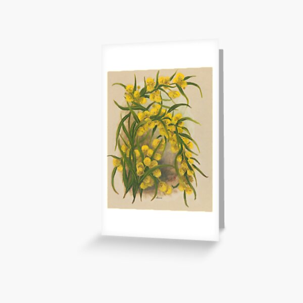 Western Australia wild flower Acacia State Library of Western Australia Greeting Card