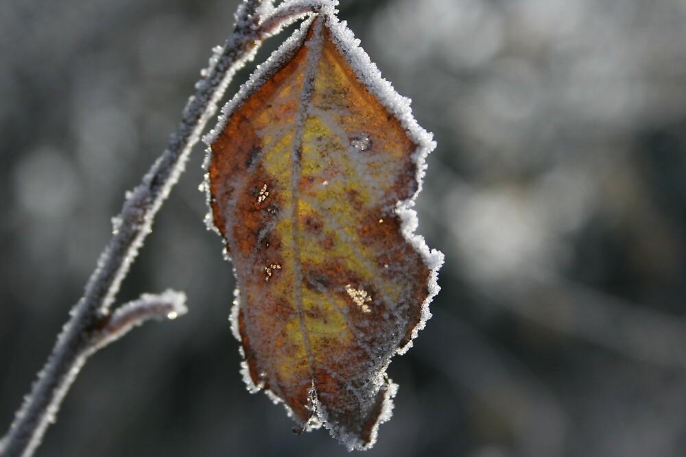 Frosty Leaf by Gazhutch32