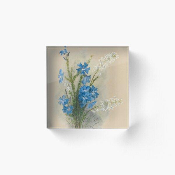 Western Australia wild flower Blue Leschenaultia - Lechenaultia Biloba State Library of Western Australia Acrylic Block