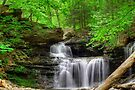 Emerald Trees Surround R. B. Ricketts Falls by Gene Walls