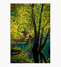 Fluorescence streams through Great Meadows Photographic Print