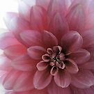 The Dahlia by Maureen Grobler