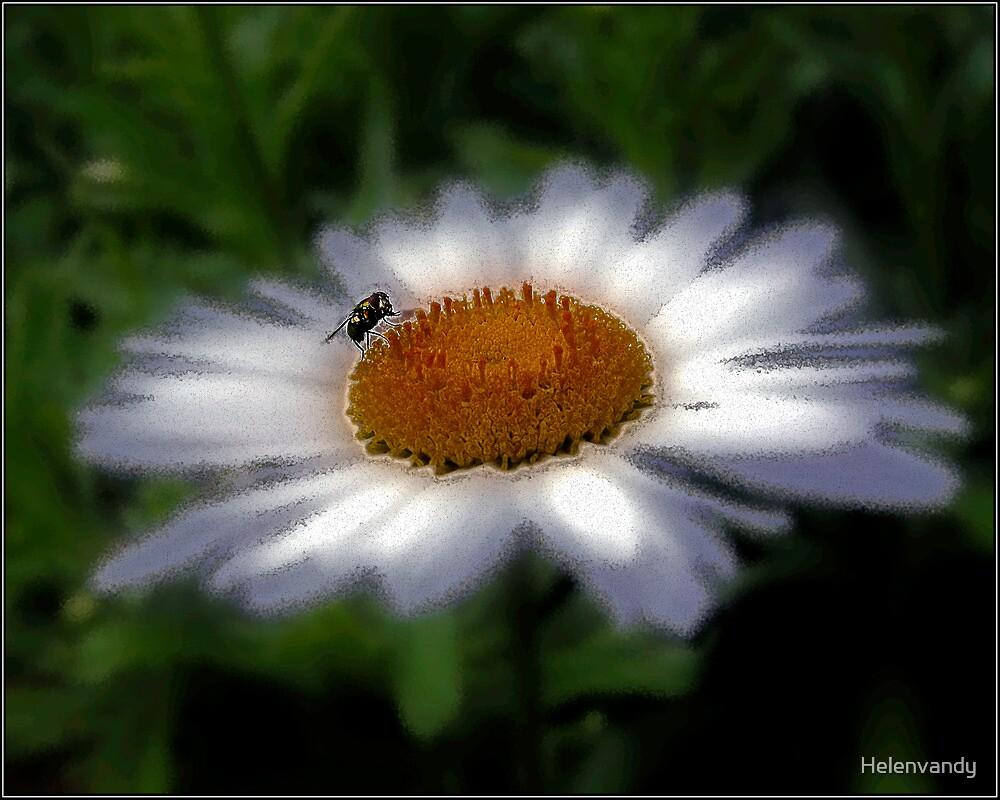 daisy fly by Helenvandy