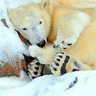 Hibernating? what a waste of time ! by Alan Mattison