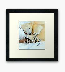 Hibernating? what a waste of time ! Framed Print