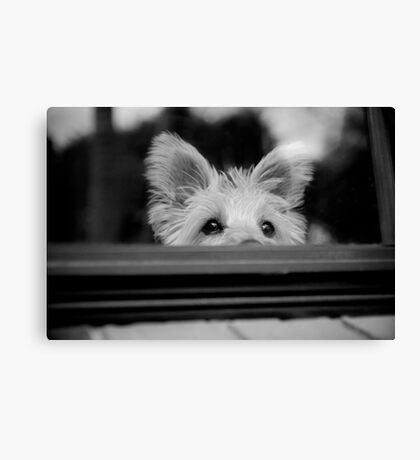 Charlie at the window Canvas Print
