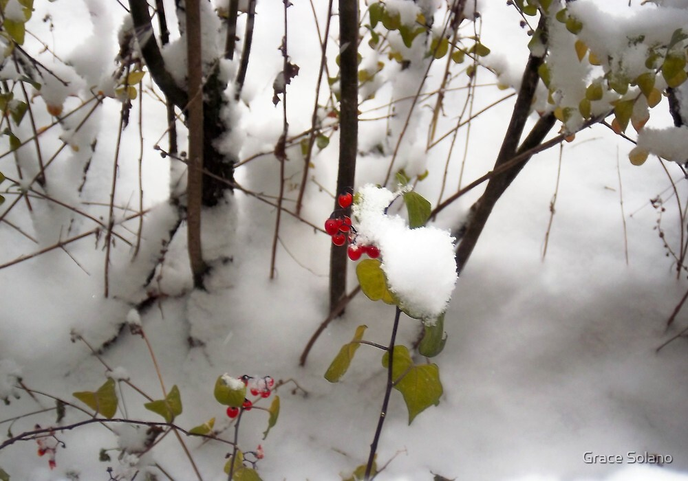 Winter Berries by Graciela Maria Solano