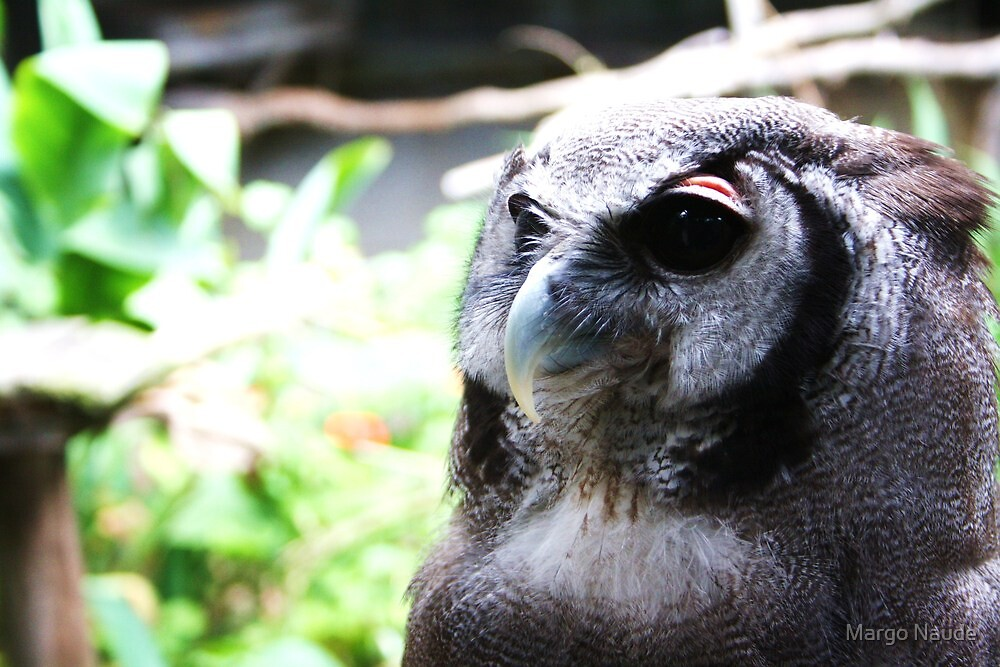 Giant Eagle Owl by Margo Naude