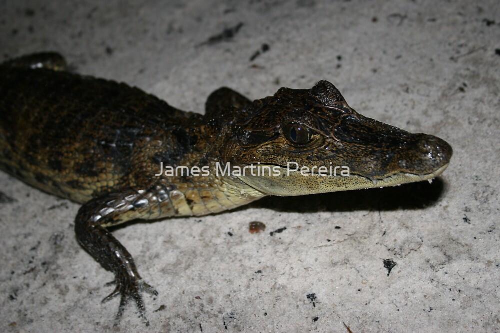 The Amazon Crocodile by James Martins Pereira