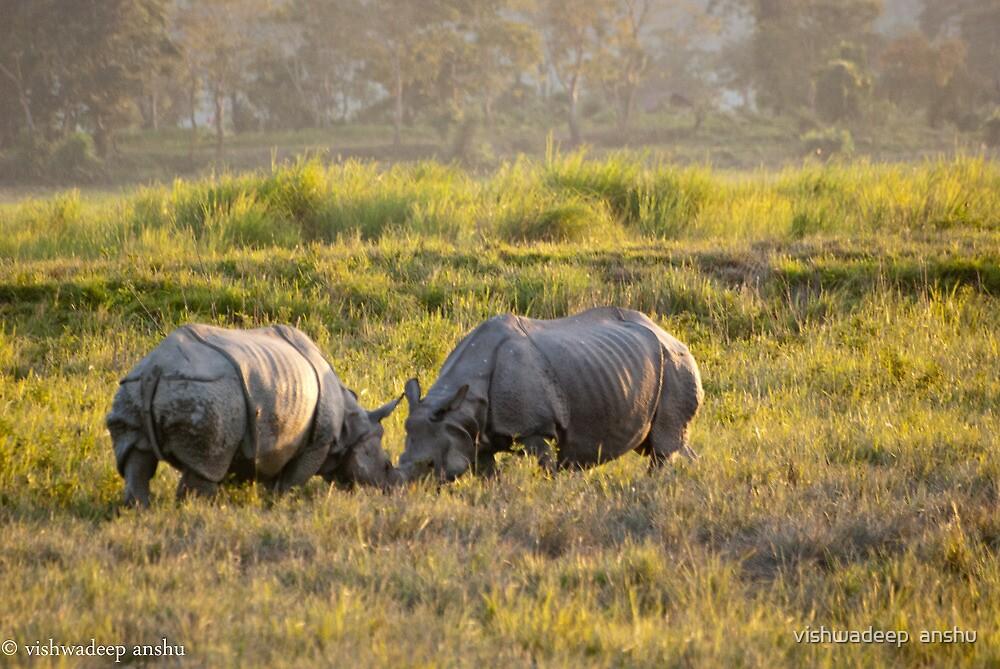 rhinos at war by vishwadeep  anshu