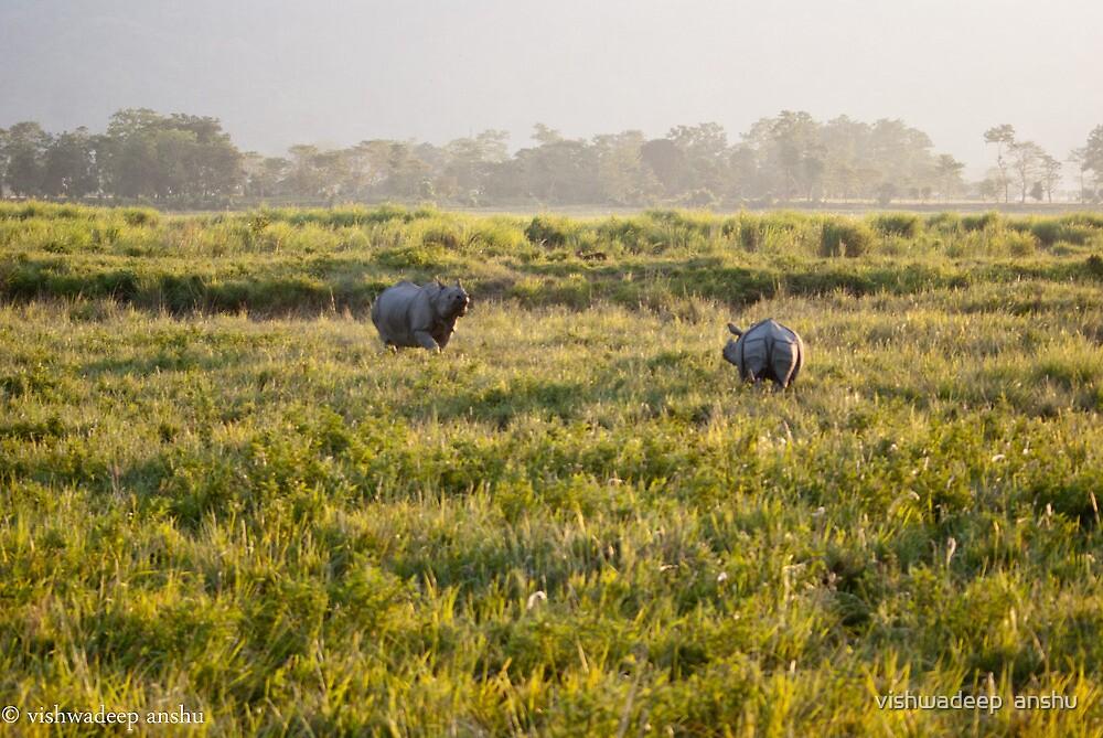 the 2 rhino by vishwadeep  anshu