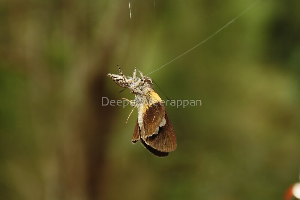 spidy on the move.. by Deepak Veerappan