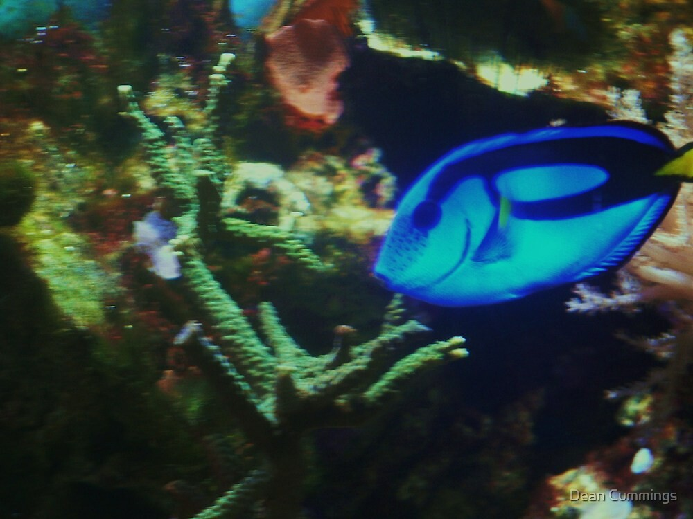 Tropical fish by Dean Cummings