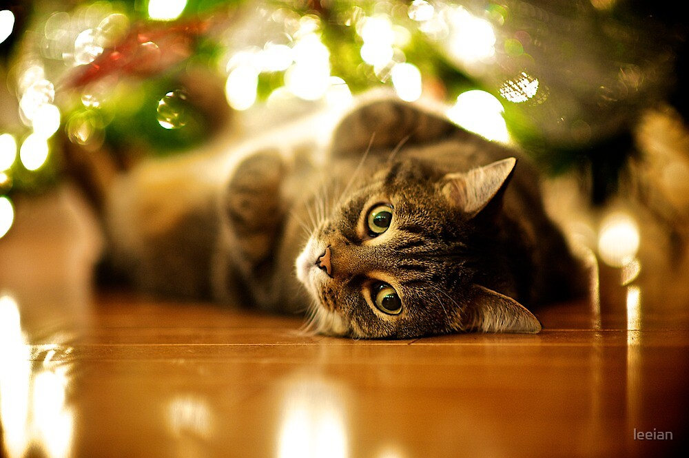 Christmas Cat by leeian