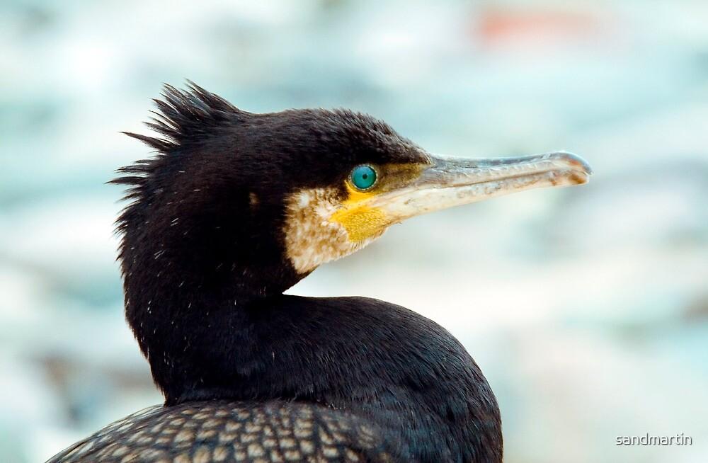 Cormorant by sandmartin