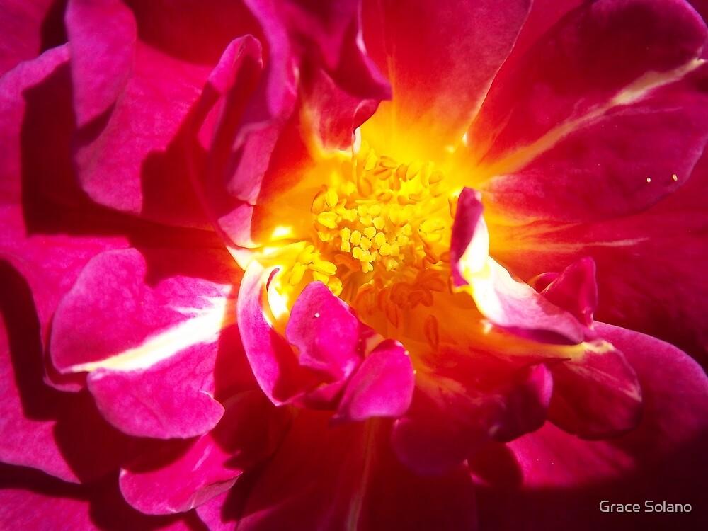 Enlightenment by Graciela Maria Solano